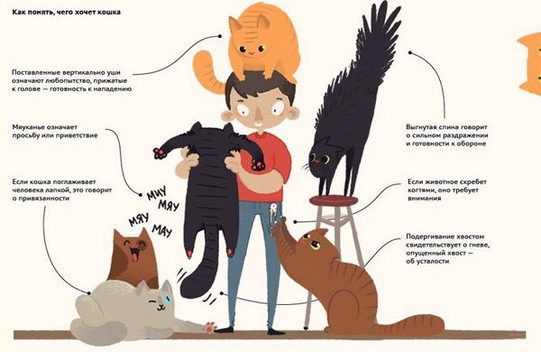 Почему к некоторым людям тянутся животные