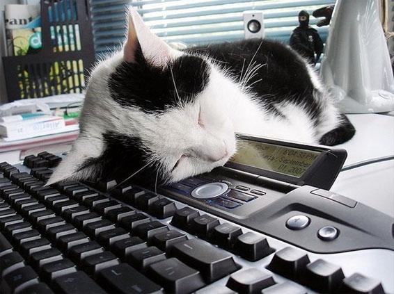 Коты за компом