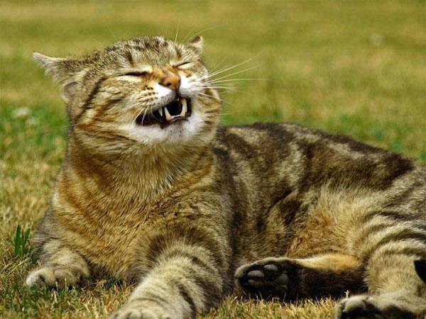 Апчхи коты