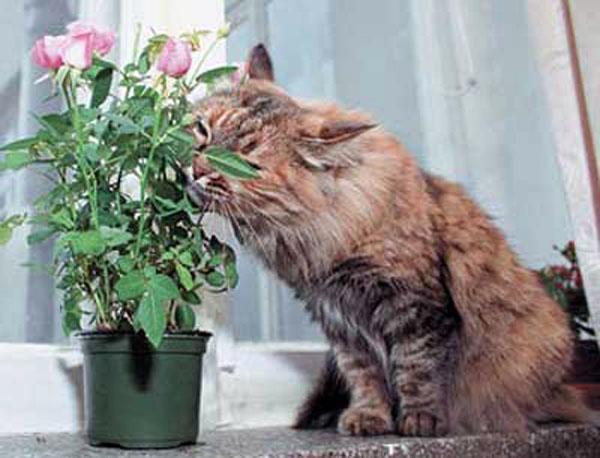 Кот жрет цветы