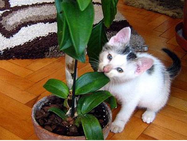 Что делать чтобы коты не ели цветы