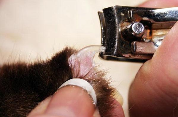Как в домашних условиях подстричь кошке ногти